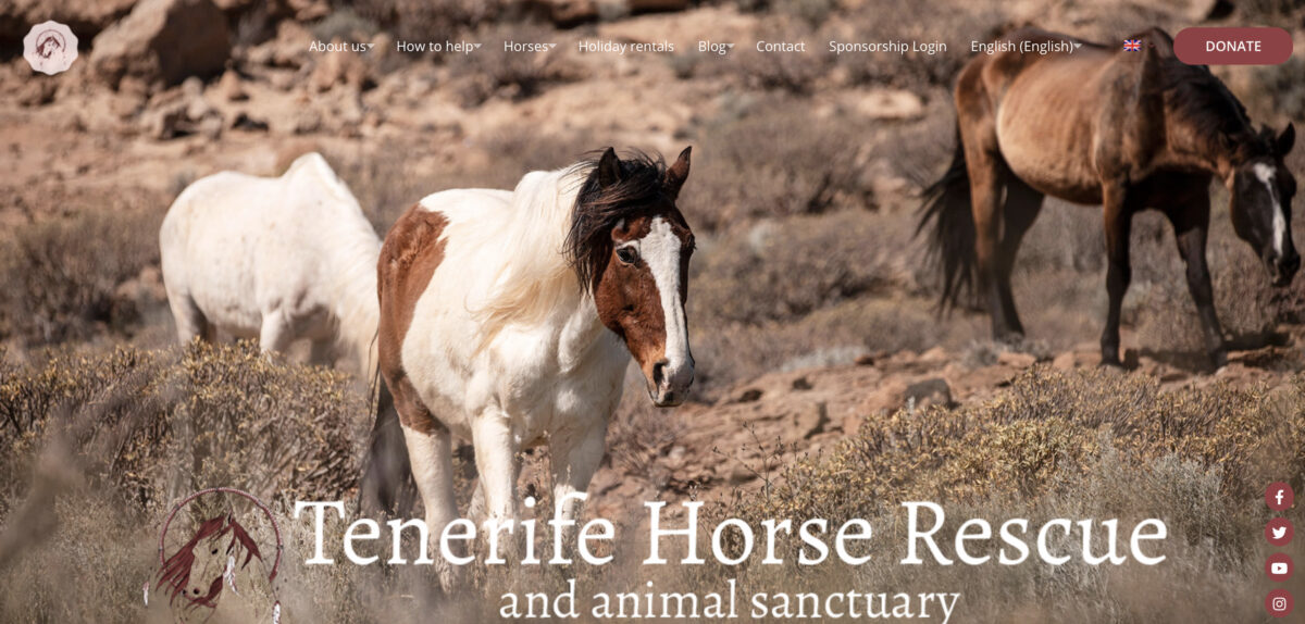 Tenerife Horse Rescue – rescuing horses and animals with a new Sponsorship System!